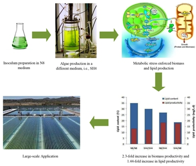 Improved lipid and biomass productivities in Chlorella vulgaris by differing the inoculation medium from the production medium