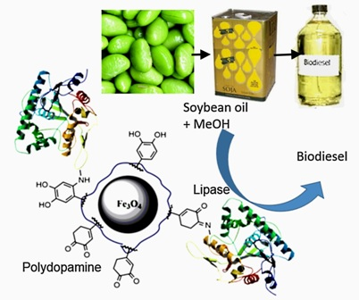 Lipase immobilized on polydopamine-coated magnetite nanoparticles for biodiesel production from soybean oil