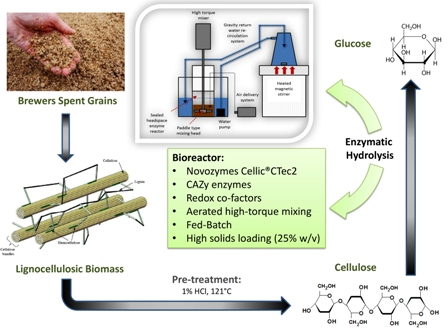 Maximising high solid loading enzymatic saccharification yield from acid-catalysed hydrothermally-pretreated brewers spent grain