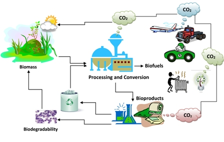 Key issues in estimating energy and greenhouse gas savings of biofuels: challenges and perspectives